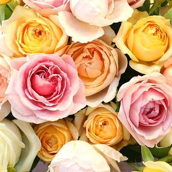 【ローズアニバーサリープラン】ガーデン側のお席確保+100本の薔薇の花束+ホールケーキ