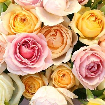 【記念日プラン】主役が大感激!大人気オリジナルプラン!100本のバラの花束で特別な記念のひと時を・・・