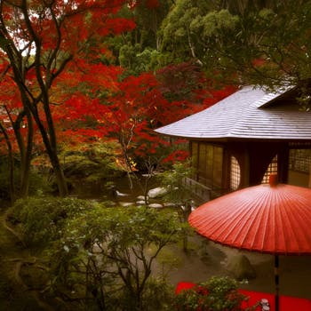 【日本庭園もおすすめ】オリジナルカクテル付!前菜、スープ、メインを2皿(魚&肉)、デザートなど全5品!