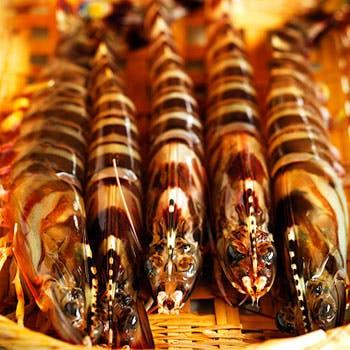 【旬の魚 握り鮨】 おまかせ11,880円ディナー