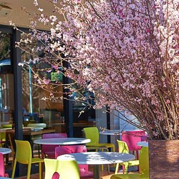 【桜を楽しむテラス席】ロゼスパークリングで乾杯!選べる前菜とメインやパスタ&デザート5種を堪能!