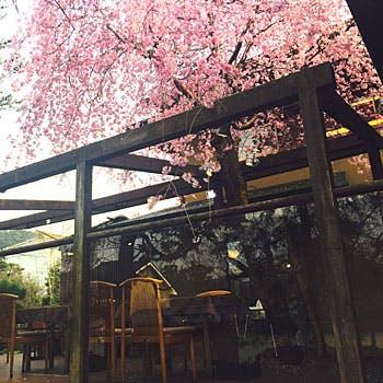 【桜が見える席確約】お土産付!湯豆腐+ゆば料理等全6品!桜を眺めながら味わう老舗料亭の京料理