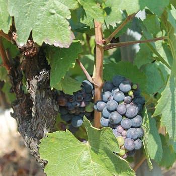 【3/29ワインメーカーズディナー】カリフォルニアワイン「幻ワインエステート」私市氏を囲んでのディナー!