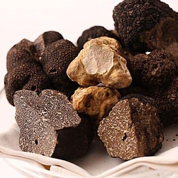 【Terres de truffes】全8品〜黒トリュフをふんだんに使用したフルコース〜16,000円
