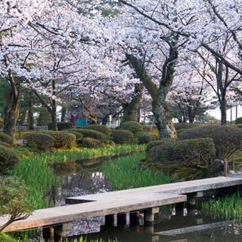 【全9品10,800円】日本海の味覚を堪能 加賀料理会席「金沢風雅」